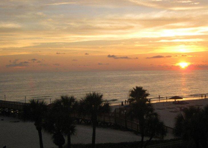 Beach Palms 310 #1