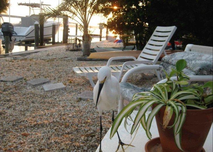 On Boca Ciega Bay! Five minute walk to the beach! #1